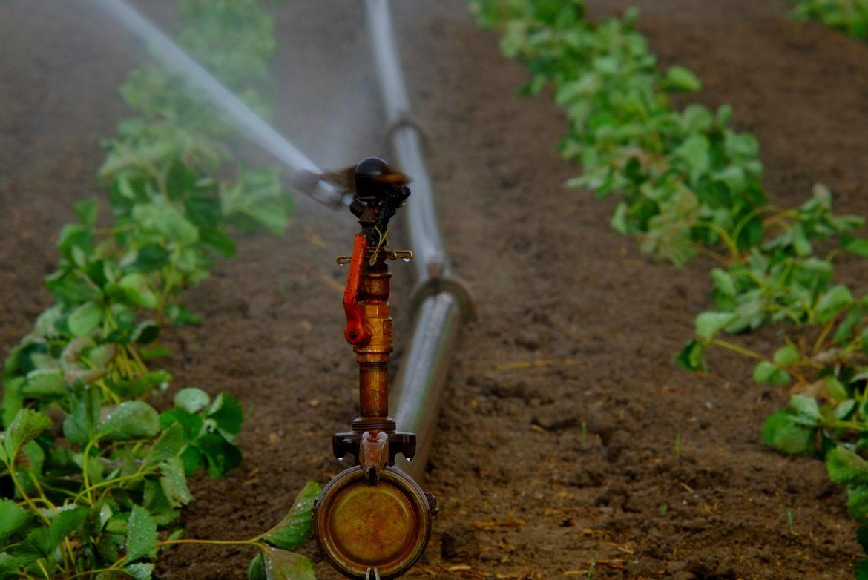 water-sprinklers-880965_1920