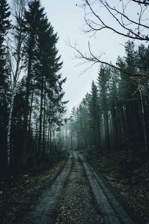 Splošna opravila v gozdu in na vrtu